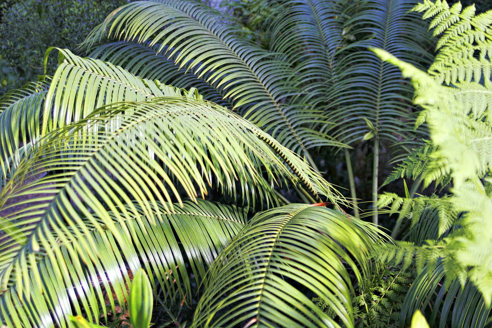 the extinction of cycads Cycads flourished during the mesozoic – the age of the dinosaurs – but, unlike the dinosaurs, have survived three mass extinction events in earth's history the devastating loss of cycads, a tragedy largely unnoticed, is very similar to.