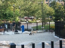A dog park with a black metal fence and a couple of dogs.