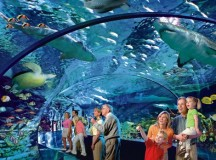 New Toronto Aquarium — 13,500 Creatures, Shark Tunnel