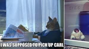 Ikea monkey meme cat