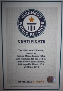 Blosom's certificate that says she is officially the world's tallest cow. Reprinted with permission; from Blosom's Facebook page.