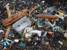 Beach garbage from the Great Pacific garbage patch. Image: Justin Dolske