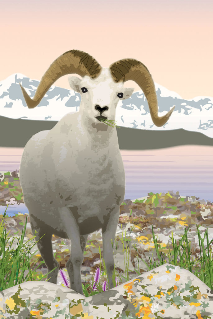 "Illustration of an Arctic-dwelling Dall Sheep is from ""Who Needs an Iceberg?  An Arctic Ecosystem"" by author/illustrator Karen Patkau, Tundra Books, 2012."